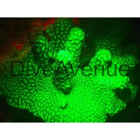 Filtre fluorescence ØM67mm Bigblue YF67