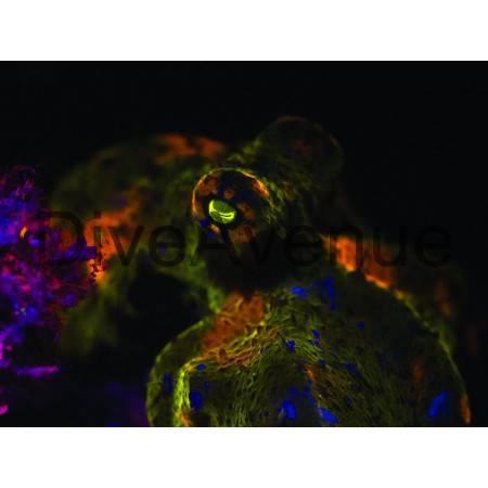 Filtre fluorescence ØM77mm Bigblue Y-1 YF77