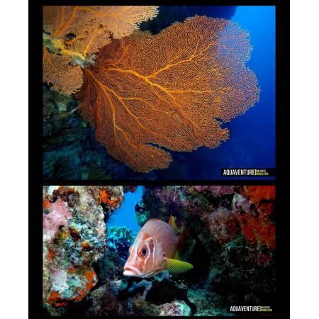 Phare de plongée DIVEPRO D40F 4200 Lm - 100°